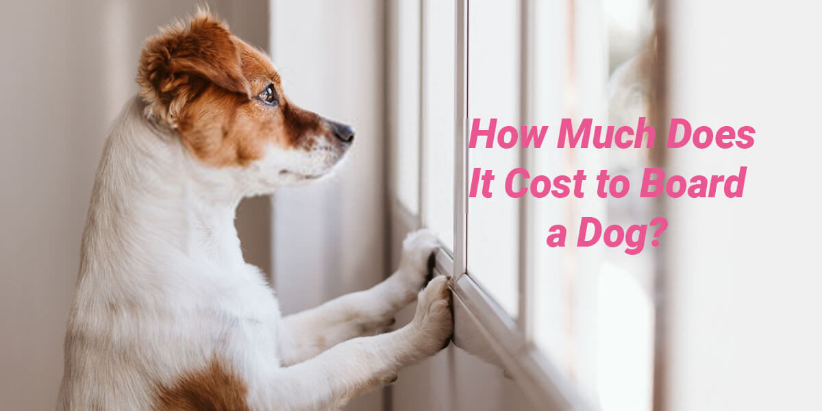 How Much Does It Cost To Board A Dog