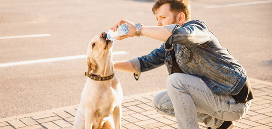 Dehydration In Dogs