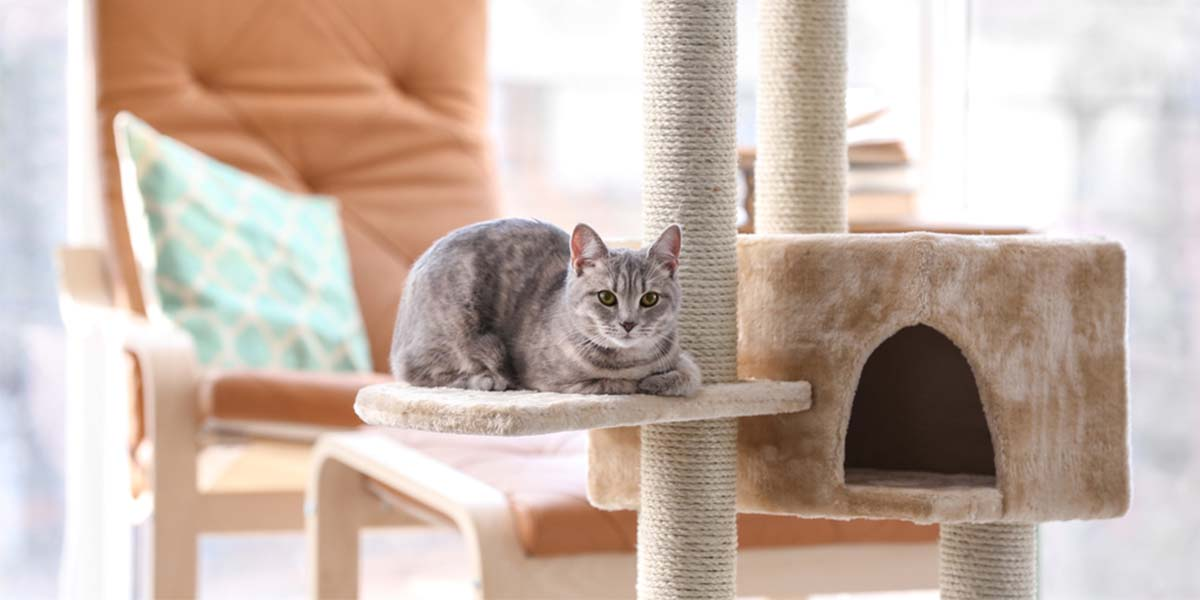 best cat tree for large cats, best cat tree condo for large cats