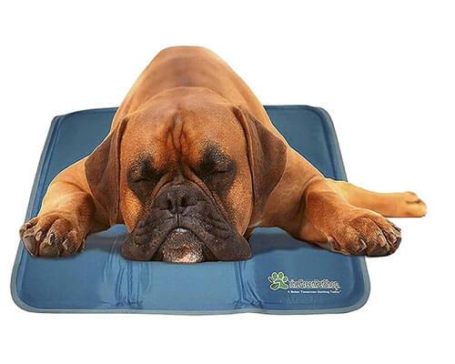 The Green Pet Shop Dog Mat