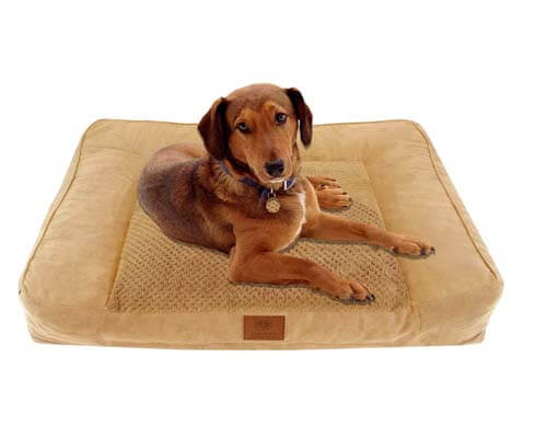 american kennel club couch bed
