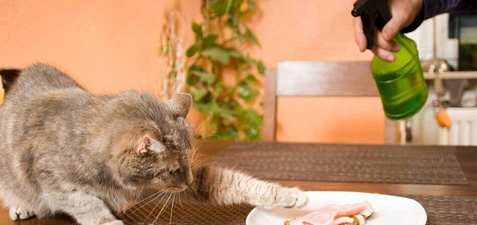 how to correctly discipline a cat, discipline a cat