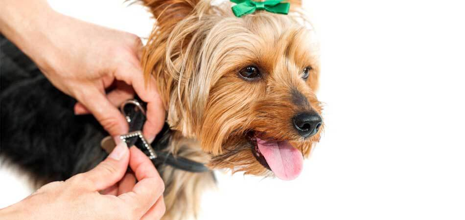 how should a dog collar fit, how to tighten a dog collar