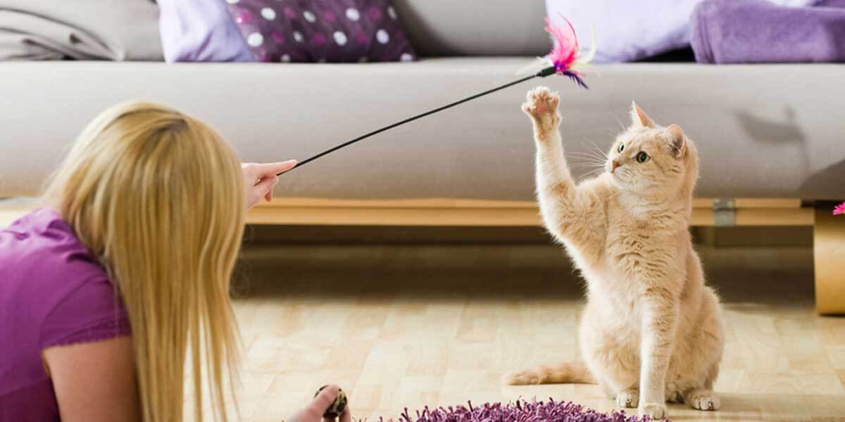 how to discipline a cat, how to control a cat