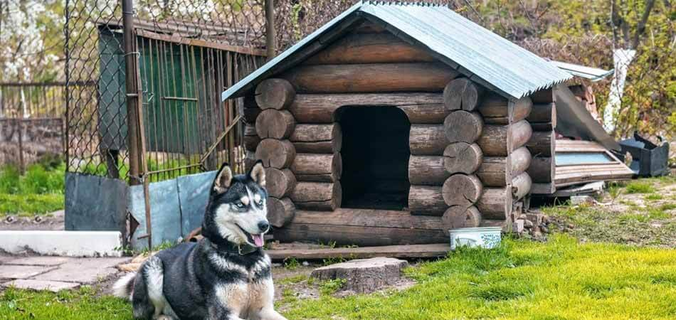 how to insulate a plastic dog house, how to insulate a dog house for winter