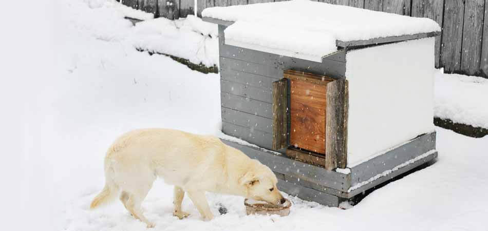 best insulation for dog house, how to insulate dog house