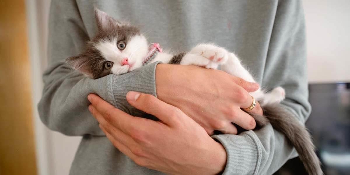 how to raise a kitten