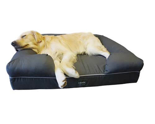 loaol dog bed, best cheap couch for dogs