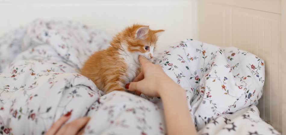 how to properly discipline a cat, cat discipline training