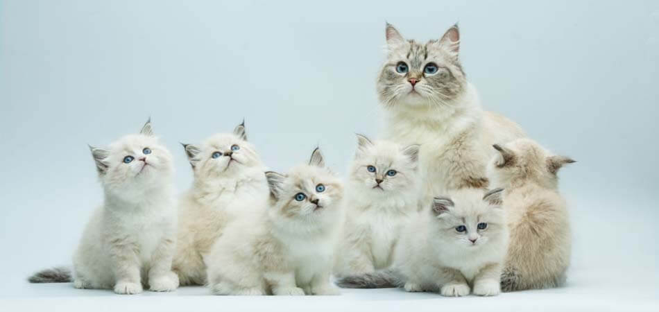 how to grow a cat, how to raise a cat