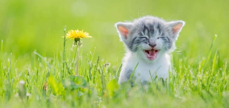 how to handle kittens, kitten care tips
