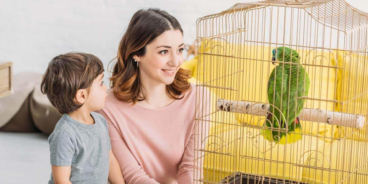 best bird cages, best cheap bird cages