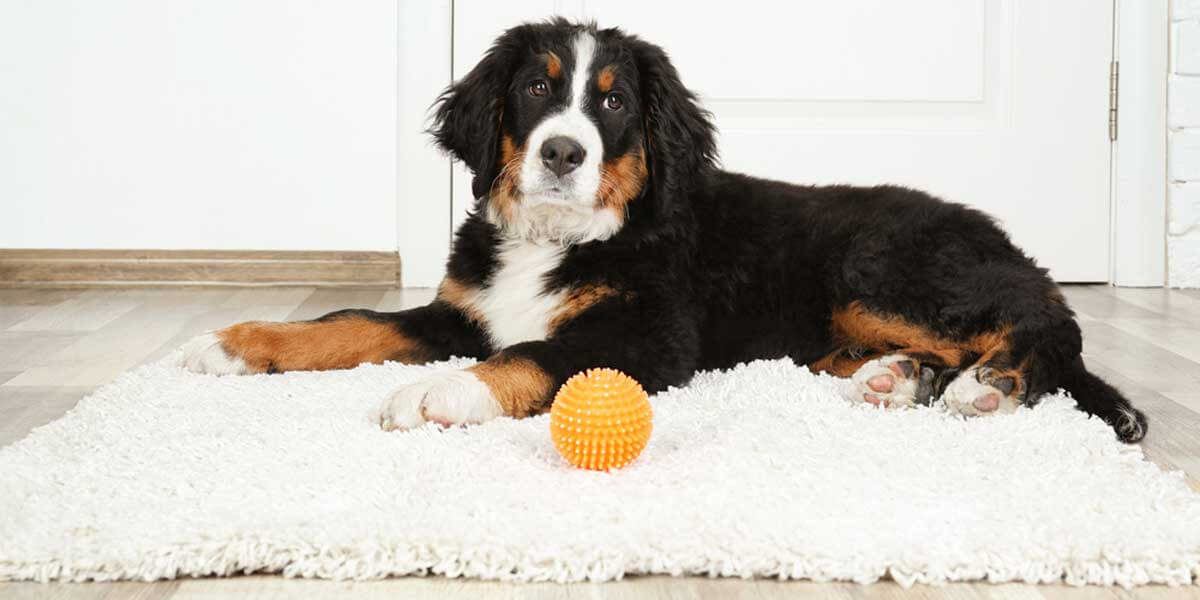 best rugs for dogs, best indoor rugs for dogs