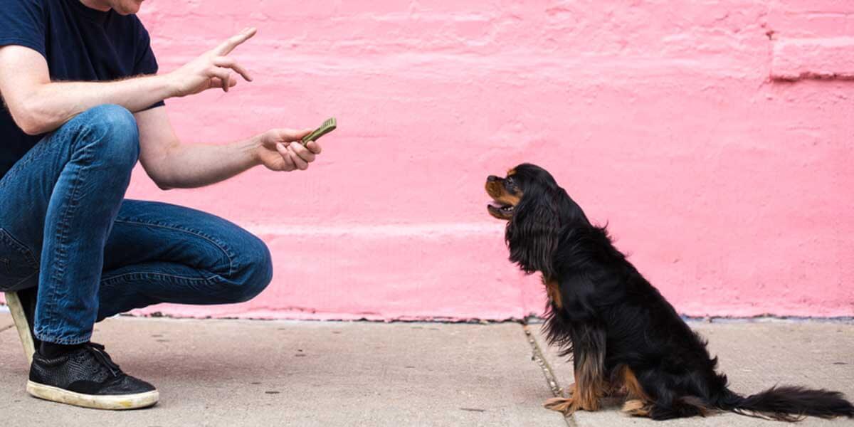 how to teach a dog to speak, train dog to speak