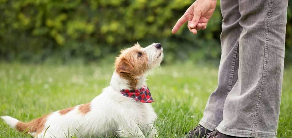 how to get a dog to speak, how to train a dog to speak